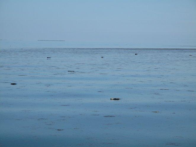 Метастазы Мексиканского залива. Часть 3